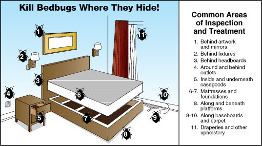 How to do bed bug prep in your bedroom and get rid of bed bugs in your bed.
