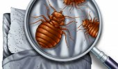 How to check for bed bugs.