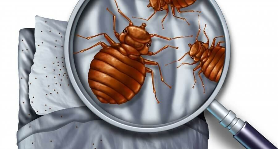 Check for bed bugs in bed